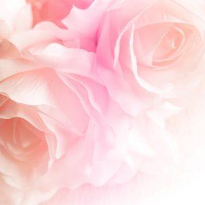 ruusulaakso-ruusutausta