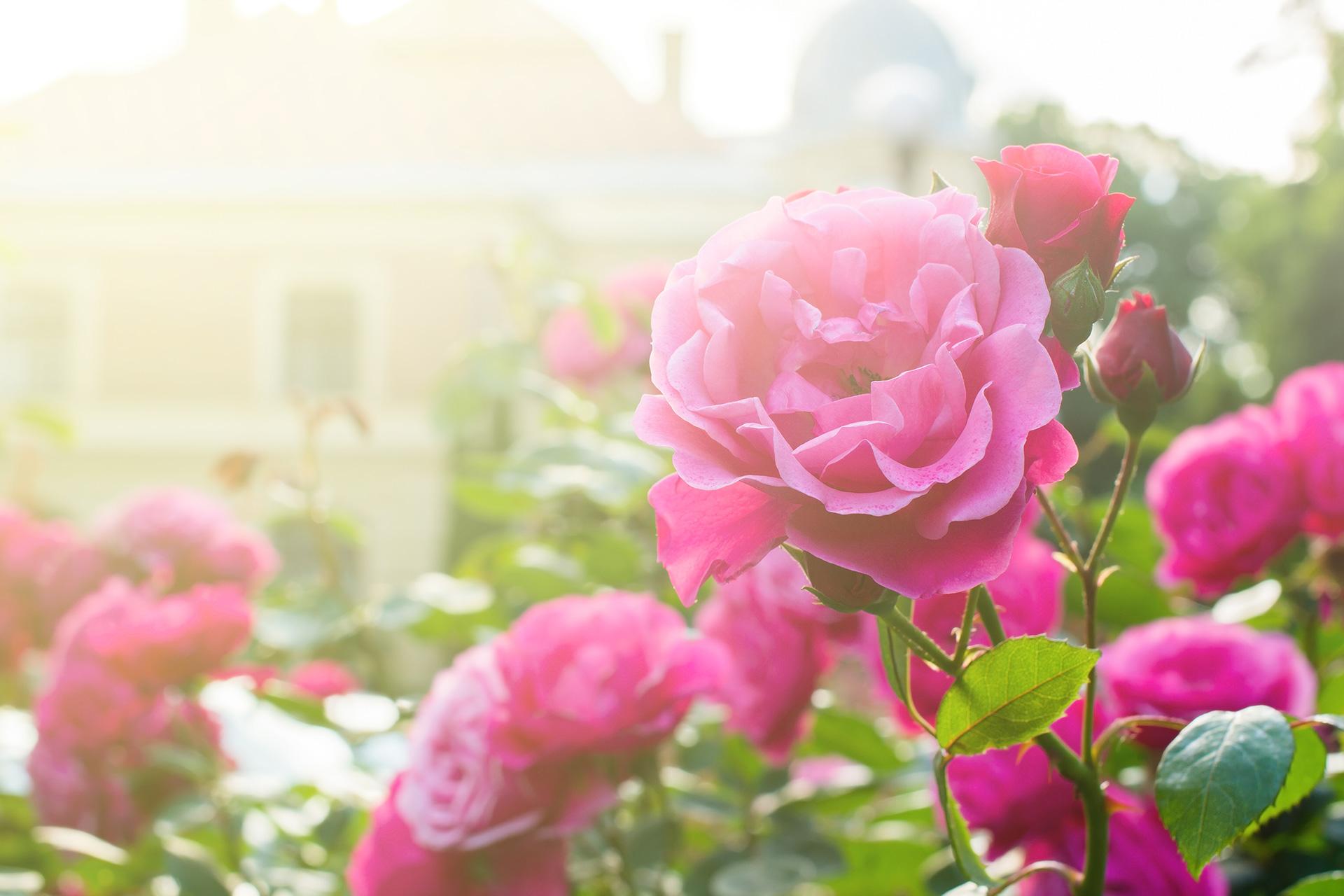 Tervetuloa Ruusulaaksoon